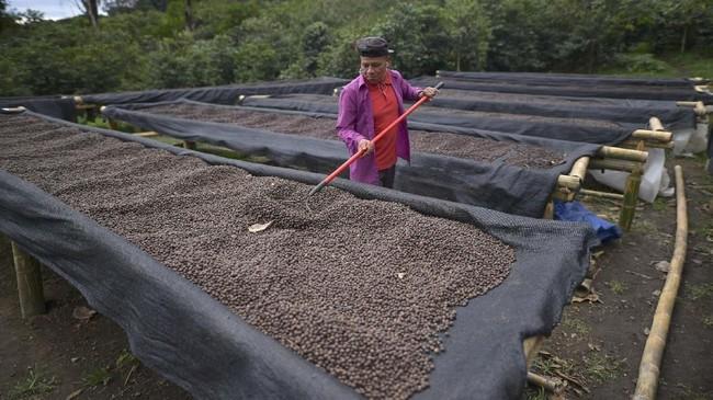 """""""Rasa kopi Geisha Panama sangat istimewa karena mungkin tumbuh di antara Samudera Pasifik dan Atlantik dan iklim yang khusus,"""" Kata Jung Min Lee, CEO salah satu coffee shop di Korea Selatan dan salah satu penikmatnya. (Luis ACOSTA/AFP)"""