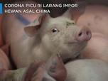 Corona Picu RI Larang Impor Hewan Asal China