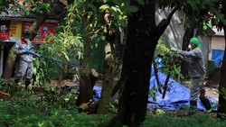 Pohon yang Terpapar Radioaktif Ditebang, Takut Jadi Mutan?