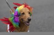 Lucunya Anjing di Karnaval Brasil, Ada Cosplay Maleficent!