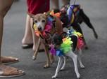 Arab Berubah! Ada Kafe Ramah Anjing Pertama di Saudi