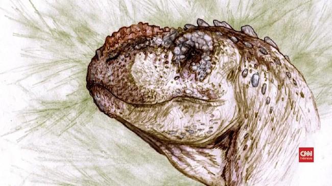VIDEO: Fosil Tralkasaurus, Saudara Jauh Tyrannosaurus