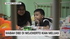 VIDEO: Wabah DBD Di Mojokerto Kian Meluas