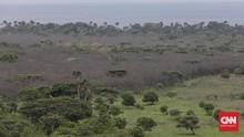 FOTO: Pemandangan Langka Taman Nasional Baluran Menghijau