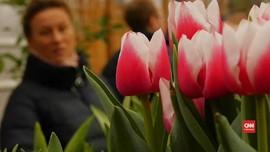 VIDEO: Ribuan Tulip Datangkan Musim Semi Lebih Awal di Rusia