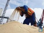 Jokowi Terus Kejar Harga Gula, Pedagang Heran Kok Masih Mahal