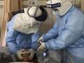Warga Belanda Positif Virus Corona Usai Pulang dari Italia