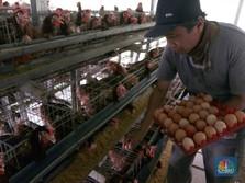 Harga Ayam & Telur Naik Seadanya, Inflasi Juli Diramal 0,04%