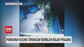 VIDEO: Pembunuh Kucing Terancam 9 Bulan Penjara