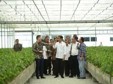 Kapan RI Evakuasi WNI di Diamond Princess? Jokowi: Secepatnya