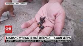 VIDEO: Seorang Warga Tewas Disengat Tawon Vespa