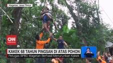 VIDEO: Kakek 68 Tahun Pingsan di Atas Pohon