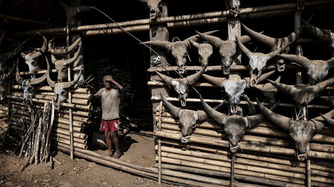 Seorang anggota Suku Naga berdiri di depan rumahnya yang dihiasi tengkorak kepala banteng yang berada di Lahel, kawasan Sagaing, Myanmar. (Ye Aung THU / AFP)