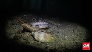 Pemicu Ratusan Ikan Mati di Maluku Utara Diusut Lewat Uji Lab