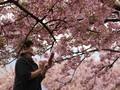 Rela Keluar Rumah Demi Mekar Sakura dan Hangat Mentari
