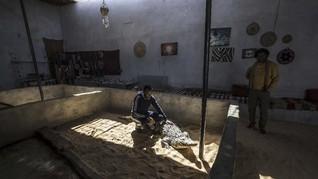 Ada Desa yang Jadikan Buaya Hewan Peliharaan di Mesir