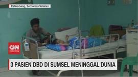 VIDEO: 3 Pasien DBD di Sumsel Meninggal Dunia