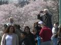 VIDEO: Pandemi Corona, Warga AS Tetap Datangi Taman Sakura