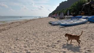 Pantai Pandawa, Bali Zoo, dan GWK Tutup Hingga Akhir Bulan