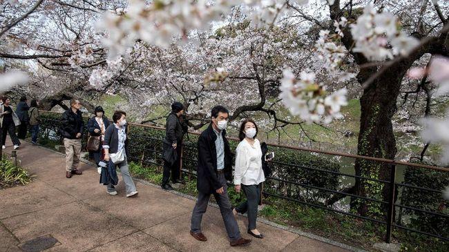 6 Cara Nikmati Mekar Bunga Sakura dari Jepang Sampai Wuhan
