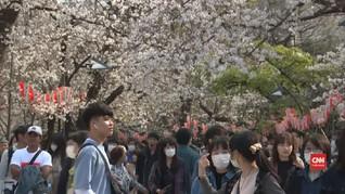 VIDEO: 'Pesta Sakura' Warga Jepang di Tengah Corona