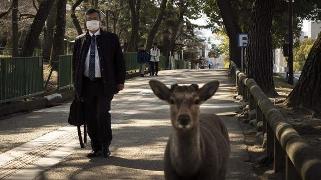 A commuter walks along a sidewalk as two deer wander around in Nara, Japan, Tuesday, March 17, 2020. (AP Photo/Jae C. Hong)