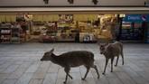 Kendati bisa bebas berkeliaran, pasokan biskuti gratis dari turis di Nara untuk rusa-rusa ini menjadi berkurang.(AP Photo/Jae C. Hong)