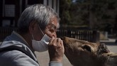 Namun, kondisi lengang di Nara justru membuat suasana canggungbagi penghuni aslinya yakni rusa yang bebas berkeliaran di jalan-jalan kota.(AP Photo/Jae C. Hong)