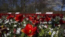 FOTO: Pemandangan Jutaan Bunga Tanpa Turis di Keukenhof