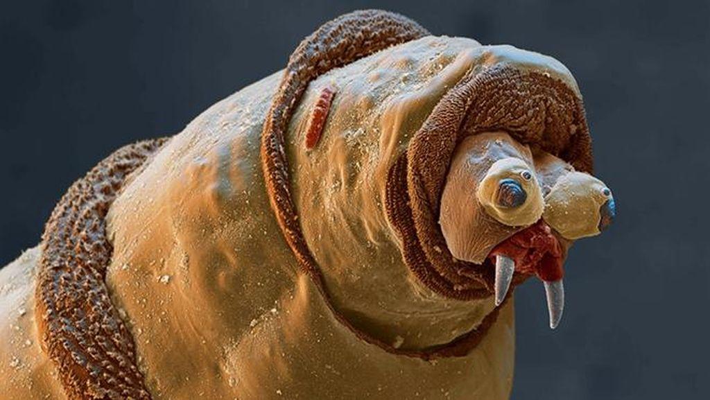 Ngeri atau Imut? Deretan Foto Makhluk Kecil Dilihat dari Microskop