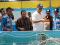 Genjot Ekspor, KKP Jadikan Meranti Pusat Budidaya Kakap Putih