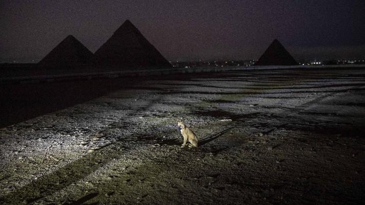Mesir menyalakan lampu piramida sebagai dukungan bagi petugas kesehatan yang memerangi wabah Covid-19.