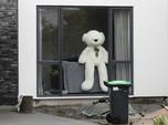 Wow! Beruang Ini Model Binatang 'Terlaris' dari Rusia
