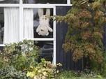 Lockdown Selandia Baru, Warga Pajang Boneka Beruang di Rumah
