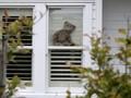FOTO: Aksi Berburu Teddy Bear Redam Bosan di Selandia Baru