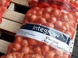 10 Kontainer Bawang Bombay Impor Sudah Masuk RI