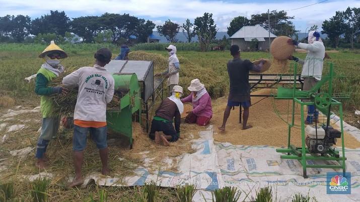 Panen raya padi sudah mulai terlihat di beberapa wilayah di Indonesia.