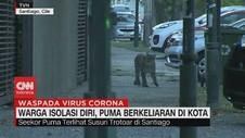 VIDEO: Warga Isolasi Diri, Singa Hutan Berkeliaran di Kota