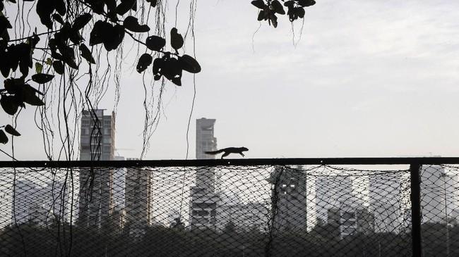 Seekor tupai terlihat berlarian di salah satu taman di India.(AP Photo/Rajanish Kakade)