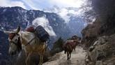 Keledai-keledai yang biasanya hilir mudik membawa barang para pendaki kini perlahan diistirahatkan. Bukan hanya pemerintah Nepal yang merugi, agen-agen perjalanan dan pendakian pun terancam gulung tikar. (Photo by PRAKASH MATHEMA / AFP)
