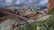 Kucing, Sahabat Penduduk Turki yang Paling Disayang