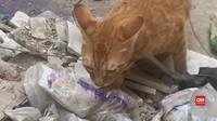 VIDEO: Akibat Lockdown, Anjing dan Kucing Liar Kelaparan