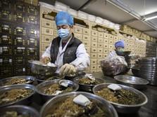 Ini Wujud Obat Herbal China yang Bisa Sembuhkan Covid-19