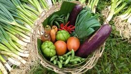 Menggantungkan Hidup Petani dalam Sebongsang 'Donasi Sayur'