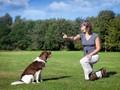 Pixie, Anjing 'Lockdown' yang Jago CPR