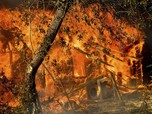 Melihat Dahsyatnya Kebakaran Hutan di California
