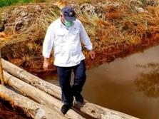 Apa Kabar Rencana Cetak Sawah Jokowi di Kalimantan Tengah?