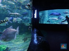 Intip Kesiapan Lokasi Wisata Jakarta yang akan Segera Dibuka!