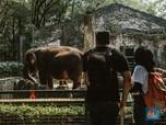 Kebun Binatang Ragunan Dibuka Kembali, Masih Sepih Banget..