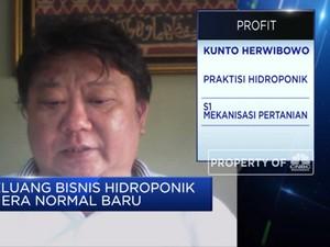 PSBB, Bisnis Hidroponik Raih Kenaikan Penjualan 2 Kali Lipat